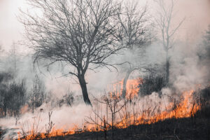 Rick Mazza MLC  Bushfire Management